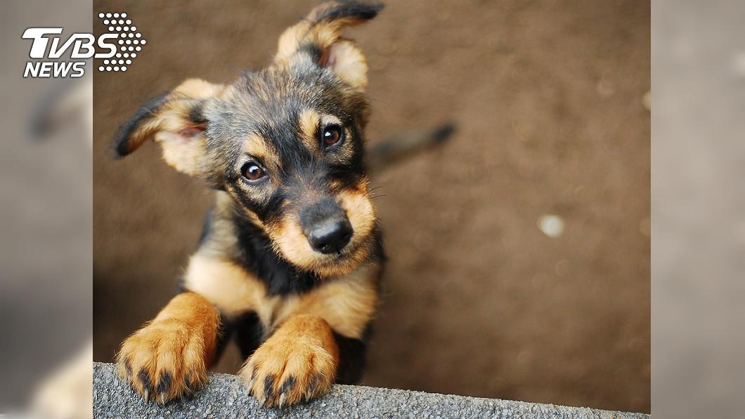 小狗可愛,但流浪狗數量多卻造成危害。圖/TVBS 11隻流浪狗佔街!居民怕到不敢過 他提議:收容棄養者