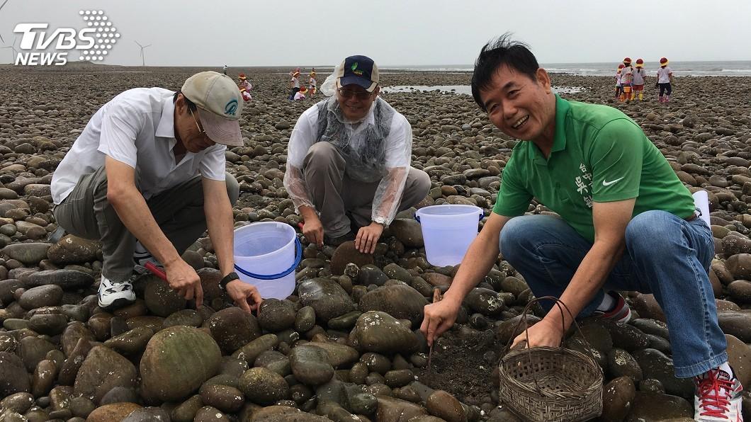 圖/中央社 海瓜子廉蛤復育有成 中市7月開放漁民採捕