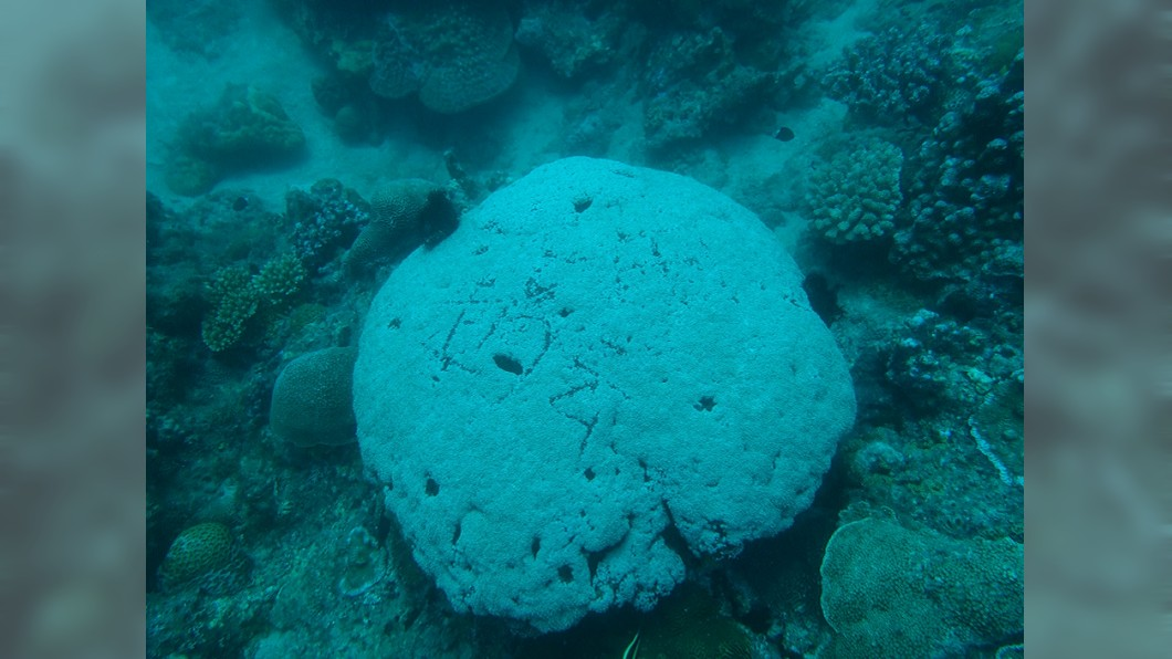 圖/翻攝靠北潛水臉書 小琉球活珊瑚被「刻名留念」!網美潛水劃2大字害萎縮