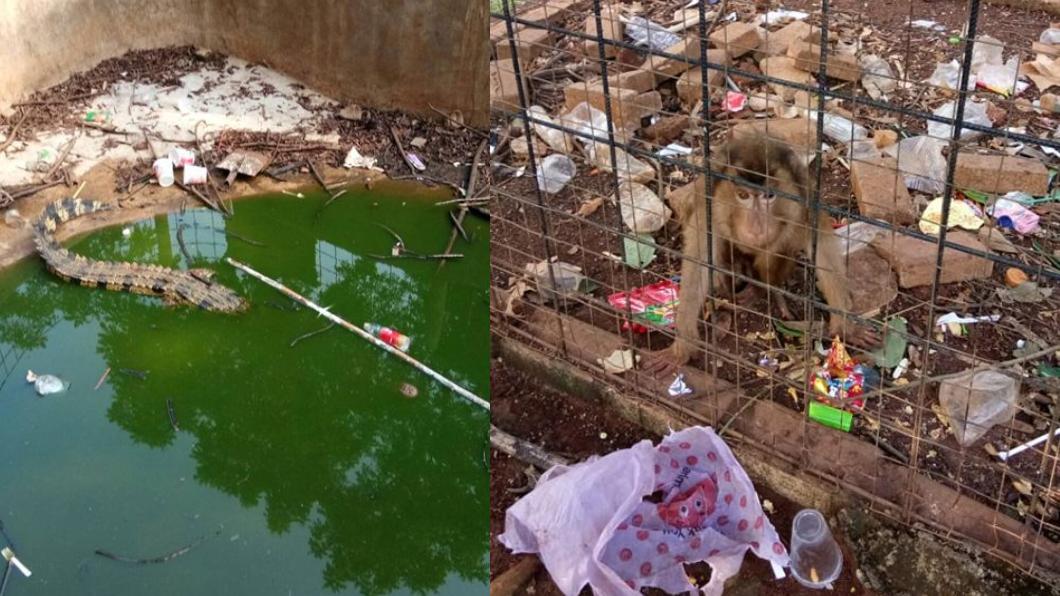 翻攝/推特 心碎!網曝最噁動物園 「滿地垃圾+食物臭酸」動物等死