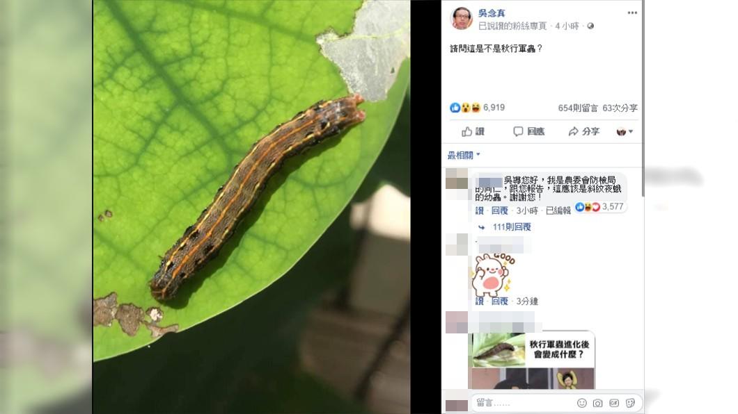 導演吳念真在臉書上PO出蟲照,詢問是否為秋行軍蟲。圖/翻攝自吳念真臉書