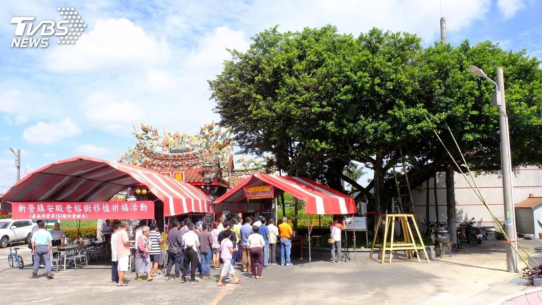 圖/中央社 台南300歲老榕樹要搬家 各界祈福盼順利