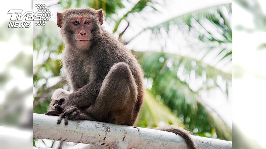 猴子對許多人來說可是個又愛又恨的動物。(圖/翻攝自推特) 狂!全家福遭「不速之客」亂入 面露跩樣還比中指
