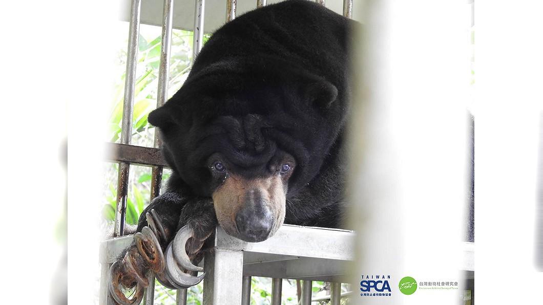 圖/台灣動物社會研究會、TSPCA提供 長年被關在小籠裡… 全台至少22隻野生動物遭不當飼養