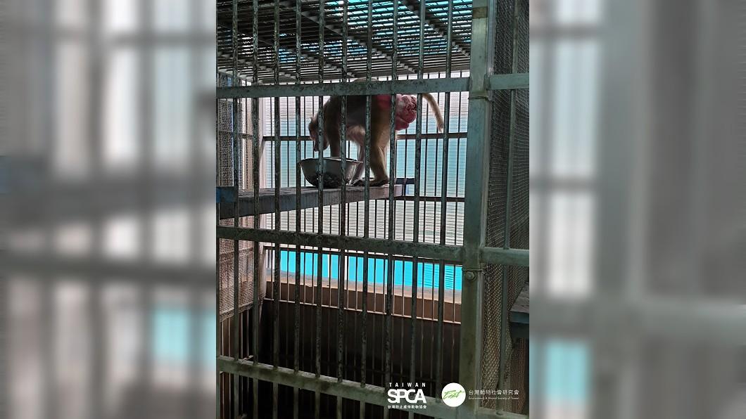 圖/台灣動物社會研究會、TSPCA提供