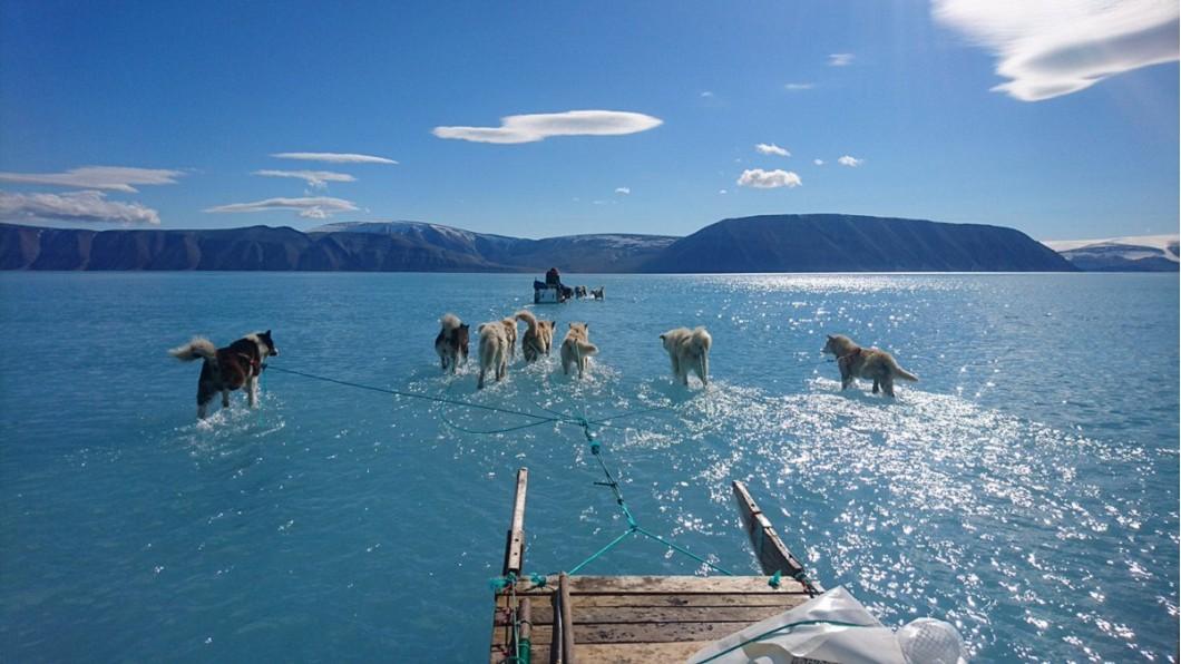 格陵蘭一天融20億噸冰! 雪橇犬「末日水上飄」