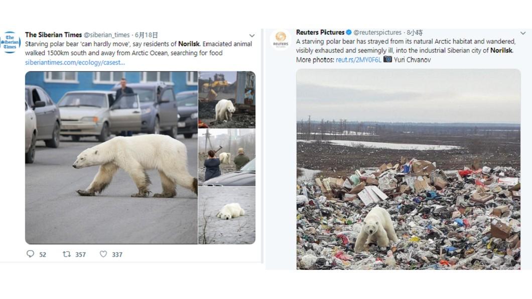 北極熊現身俄羅斯西伯利亞的城市諾里爾斯克。圖/翻攝自The