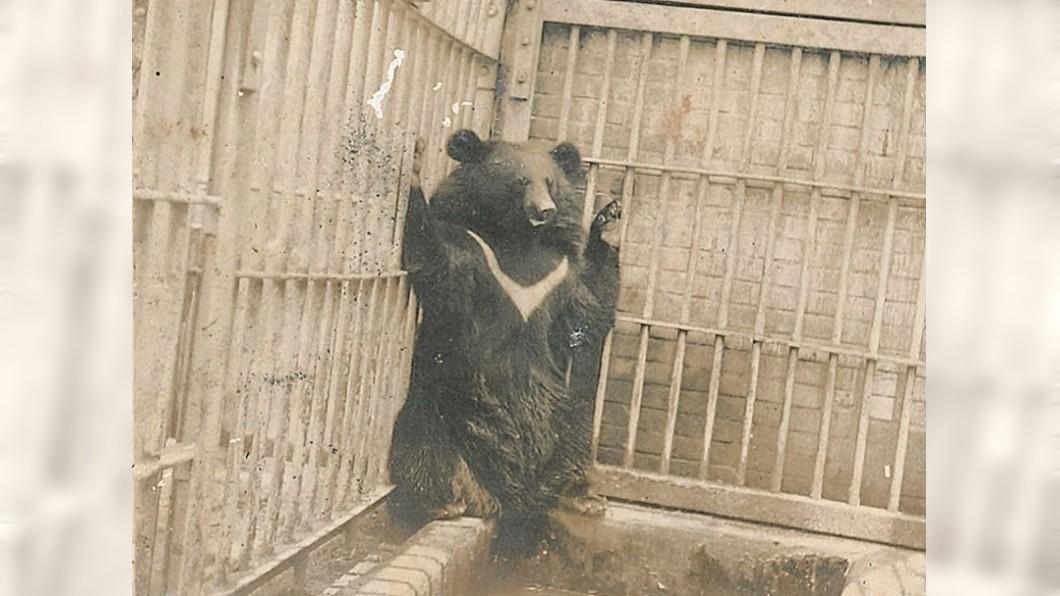 台灣黑熊被奶奶認成很兇的大狗。圖/花蓮縣牛犁社區交流協會臉書 阿嬤「養過很兇的大狗」 舊照一看…「白色深V」驚呆了