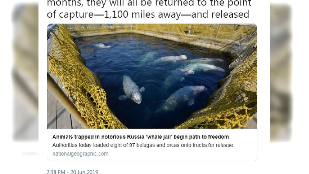 鯨魚監獄太惡劣嚴重傷害鯨魚。圖/截自National Geographic推特