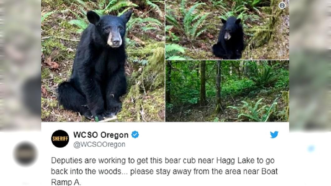 這隻才2歲多的小黑熊已被安樂死。圖/翻攝WCSO Oregon Twitter
