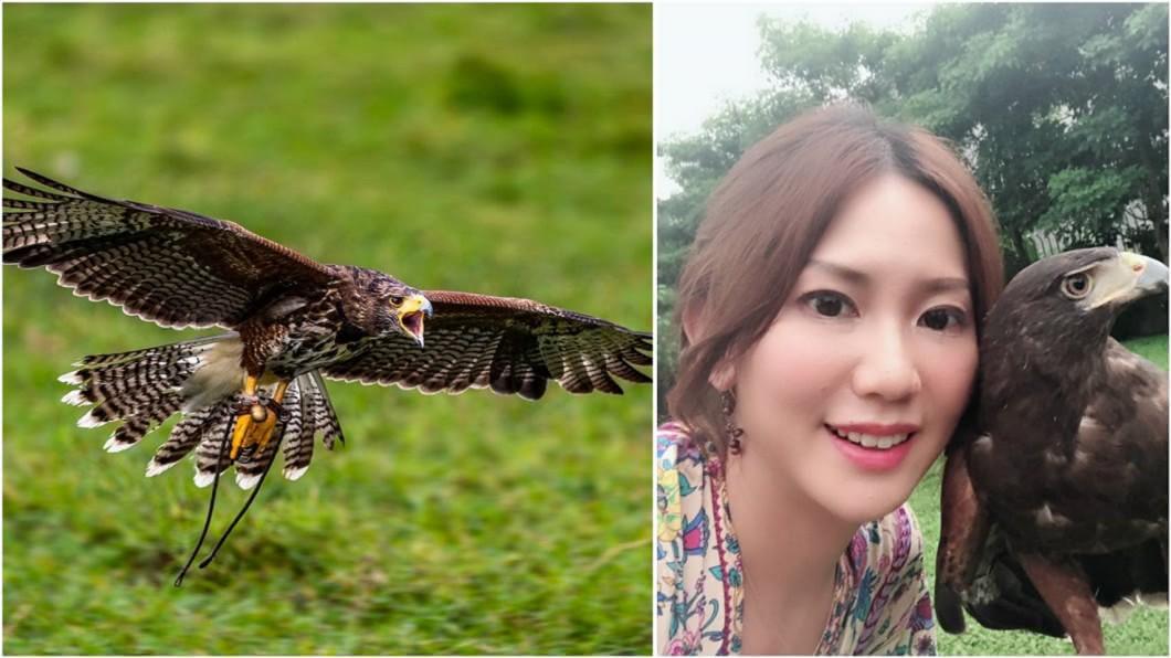 兇猛老鷹見到李婉菁就會撒嬌,反差萌超可愛。圖/李婉菁提供 兇猛老鷹一見美女「變娘砲」狂撒嬌 反差萌讓人嘖嘖稱奇