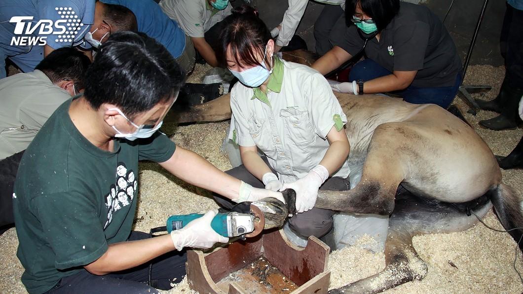 圖/中央社 把握休園10天 動物園幫動物規劃特定健檢套餐