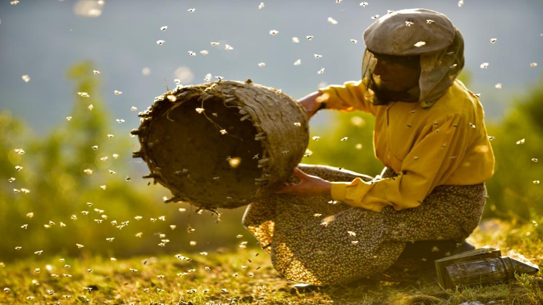 圖/台北電影節 提供 古法養蜂人 意外邂逅!成就甜「蜜」紀錄片