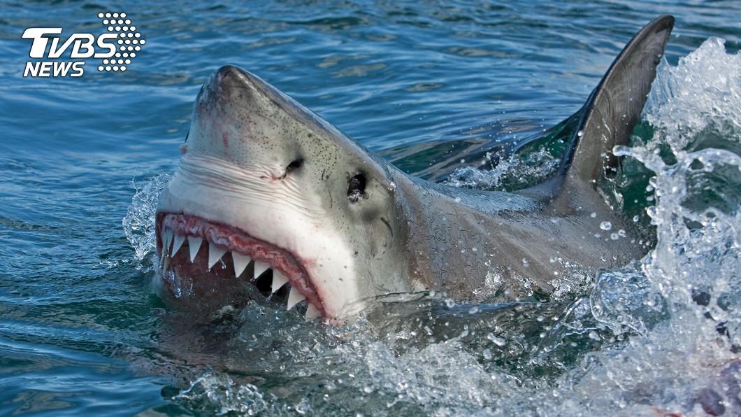 示意圖/TVBS 正妹與豬浮潛!遭鯊魚群「撕咬分屍」慘死 爸媽目擊心碎