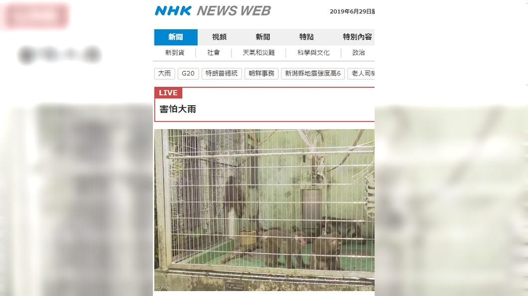 沖繩世界兒童王國動物園脫逃猴子全數捕回。圖/截自NHK news
