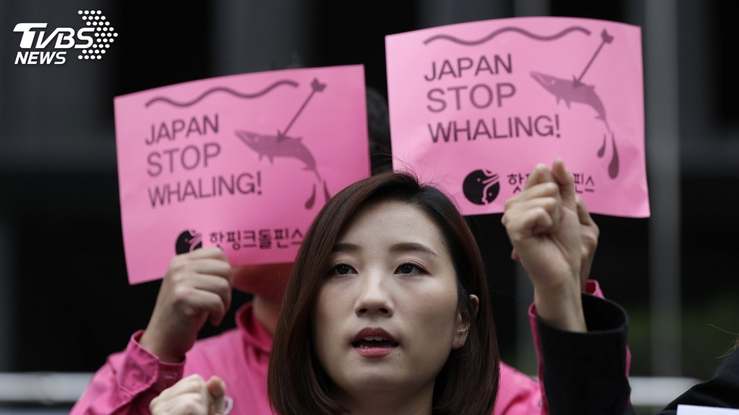 圖/達志影像美聯社 日本不甩IWC捕鯨禁令 7/1重啟商業捕鯨