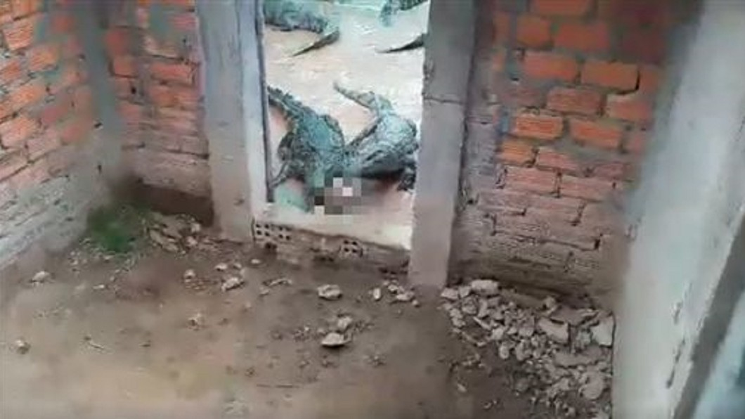 圖/翻攝臉書 2歲女童摔進「鱷魚池」遭圍攻啃咬 父親心碎找到頭骨