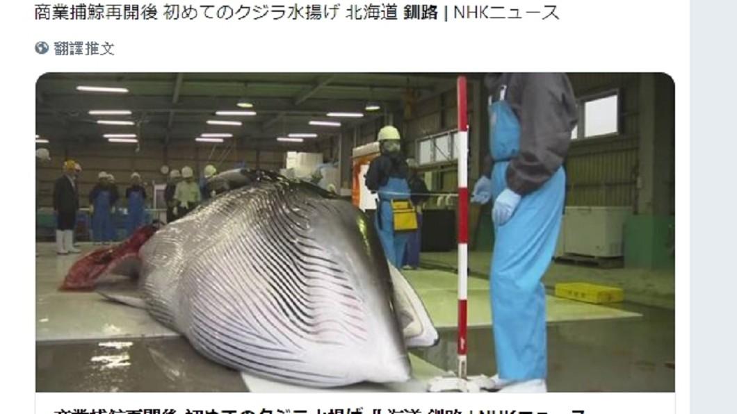 重啟捕鯨第1天,北海道漁民就捕獲2頭小鬚鯨。圖/翻攝yamagishi_doh推特 日本重啟補鯨第1天 北海道抓到2隻小鬚鯨