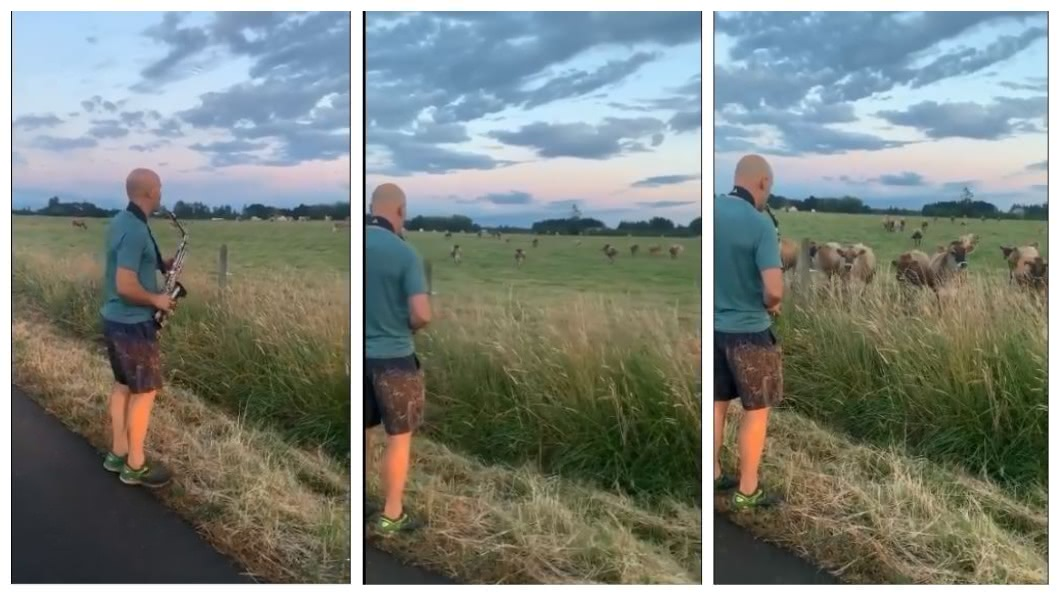 美國一名男子在牧場吹薩克斯風,沒想到竟然吸引牛群佇足聆聽。(圖/翻攝自推特) 對牛彈琴!牛群全被他「收服」 卡位聆聽超陶醉