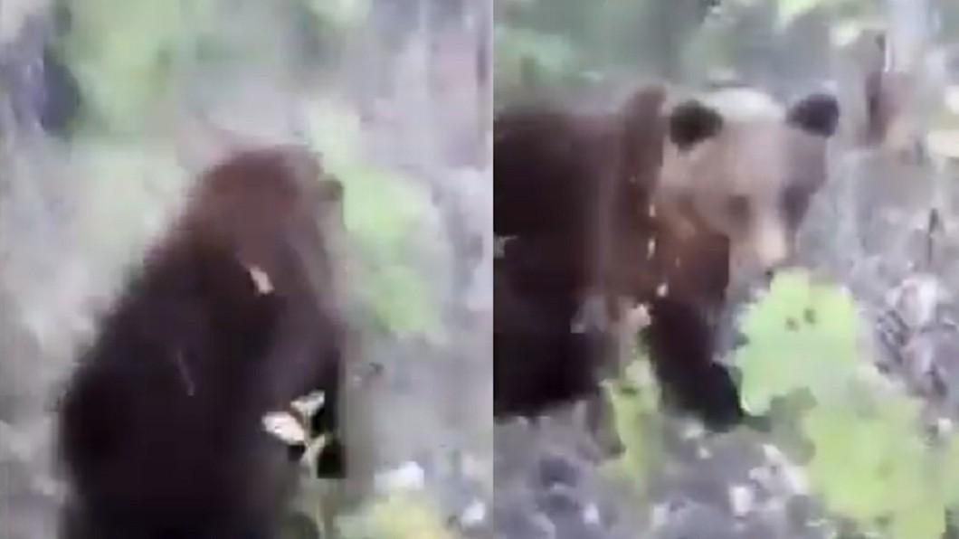 男子在森林發現棕熊,竟朝牠的屁股踢了一腳。圖/翻攝自「 MOVIESHD PLUS」YouTube 男偷踹棕熊屁股 被怒瞪狠咬還戲稱「熊的禮物」