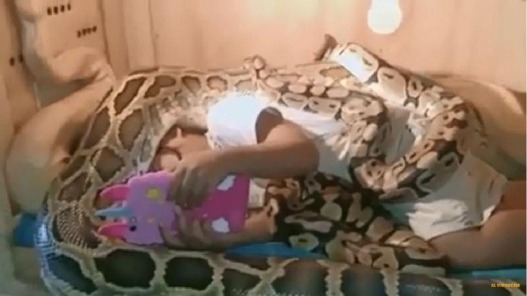 6條巨蟒團團包圍纏繞,3歲女娃超淡定完全不怕。(圖/翻攝自YouTube) 6條巨蟒當床伴 3歲女娃淡定躺床看手機