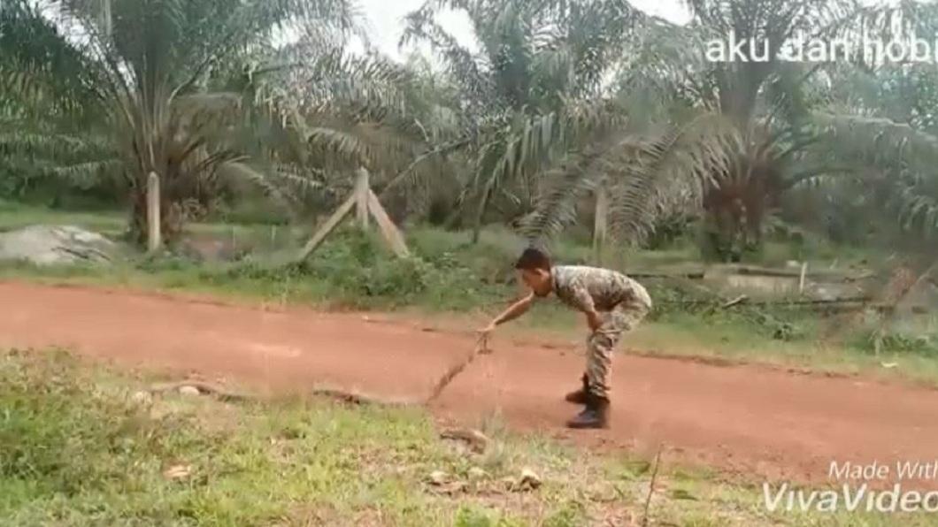 軍人伸出2根手指慢慢將眼鏡王蛇的頭部壓至地面。(圖/翻攝自YouTube)