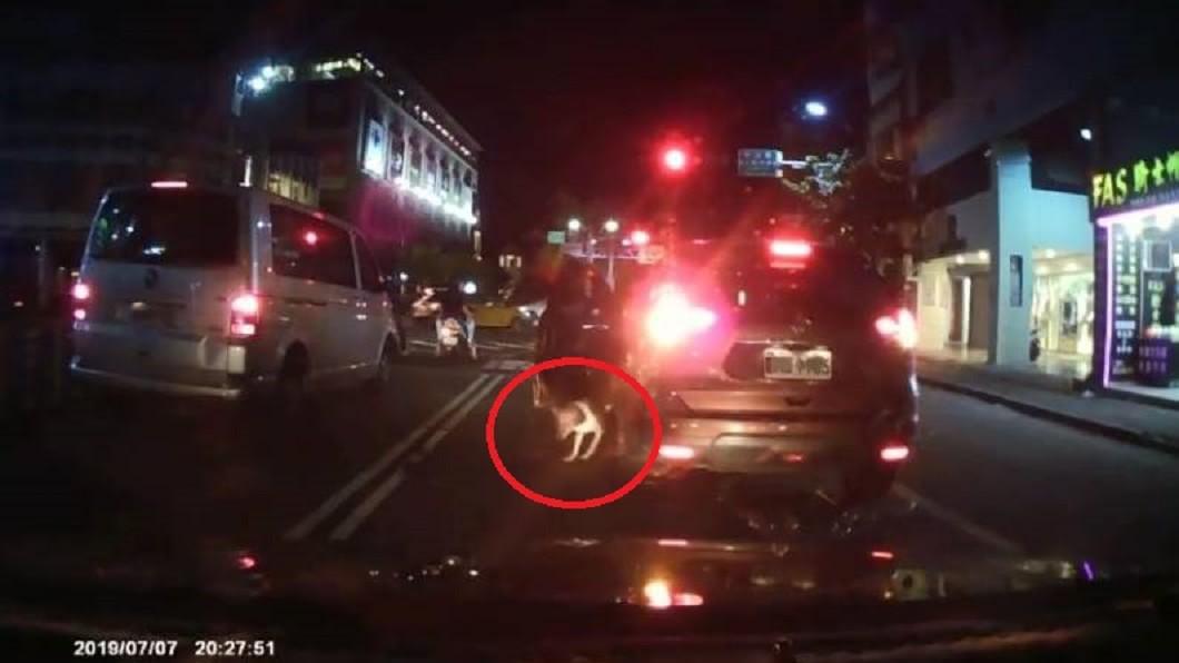 駕駛竟然趁紅燈時將狗狗丟出車外。圖/翻攝宜蘭知識+臉書 狠心飼主!趁紅燈丟狗下車 牠緊跟車尾追不到