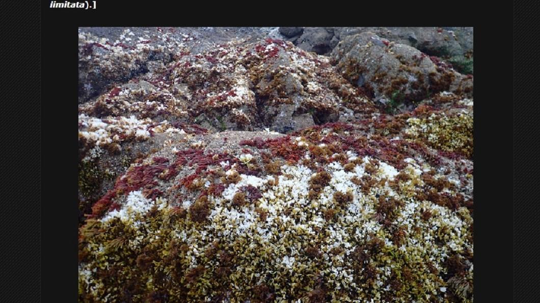 索恩斯表示海藻也已受到影響,出現不正常的紅色和白色。圖/翻攝索恩斯網誌bodegahead.blogspot.com