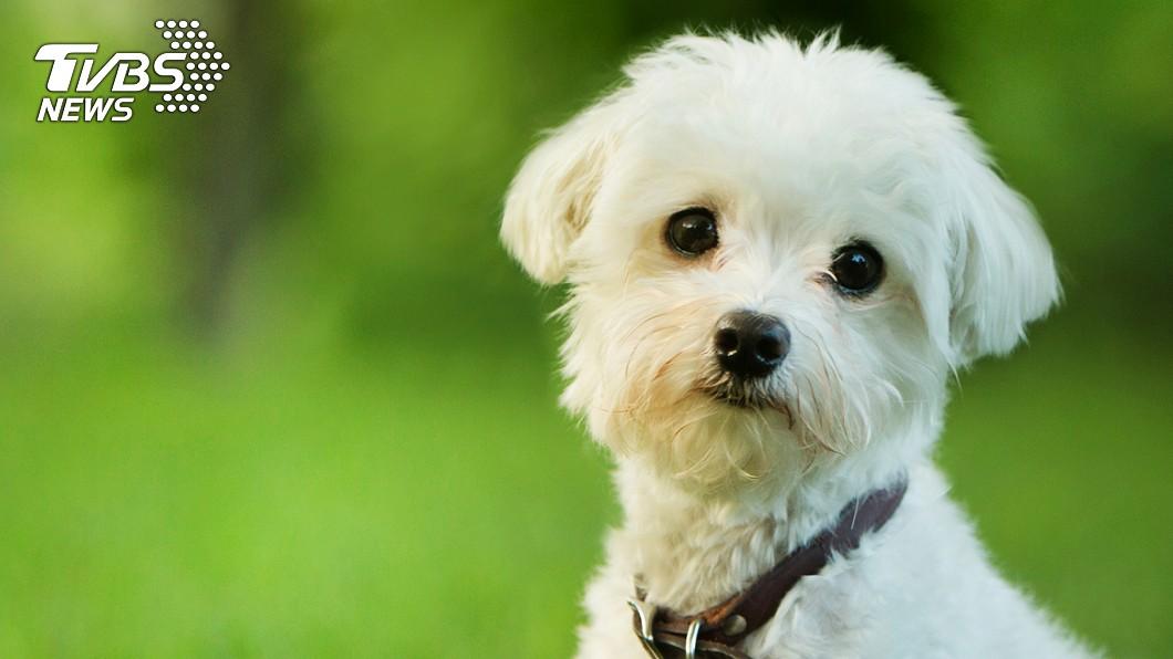 (示意圖,與本事件人物無關。圖/TVBS) 香港確診病患的家犬 新冠肺炎竟呈弱陽性