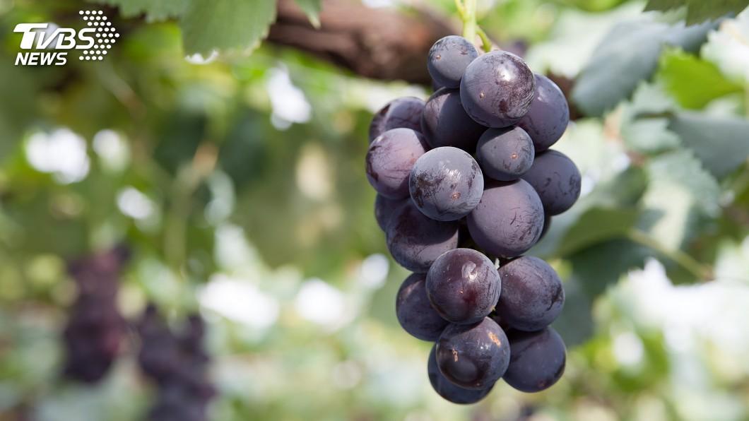 示意圖/TVBS 「浪漫紅寶石」天價葡萄 一顆1.4萬台幣賣出