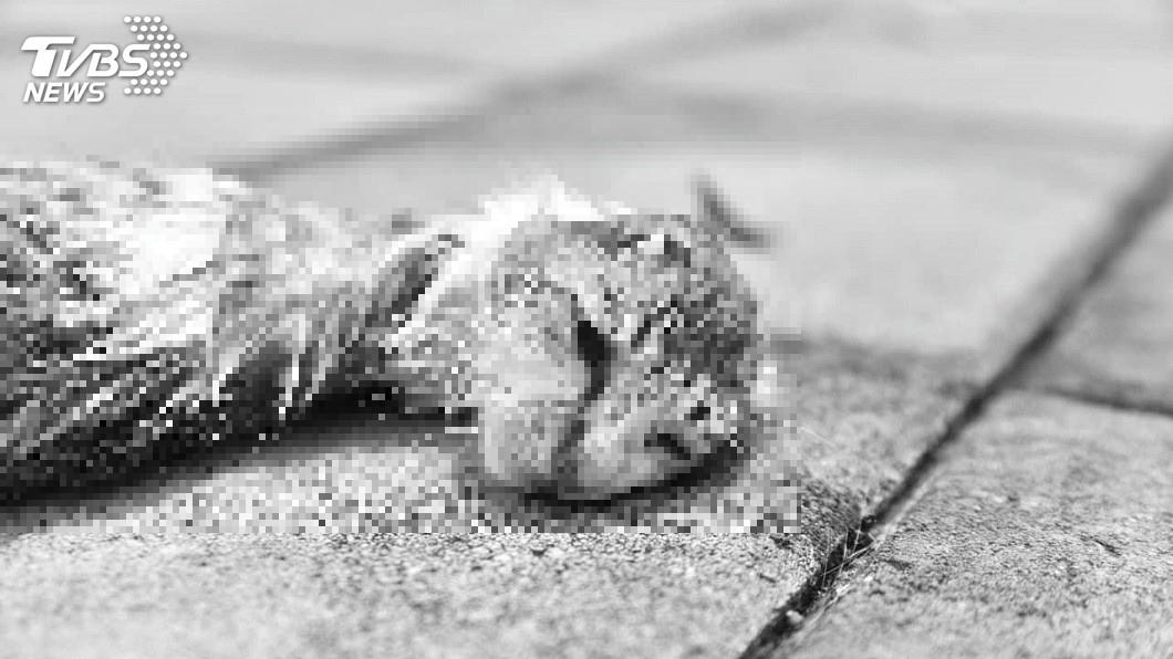 圖/嘉義市動物守護協會 授權提供