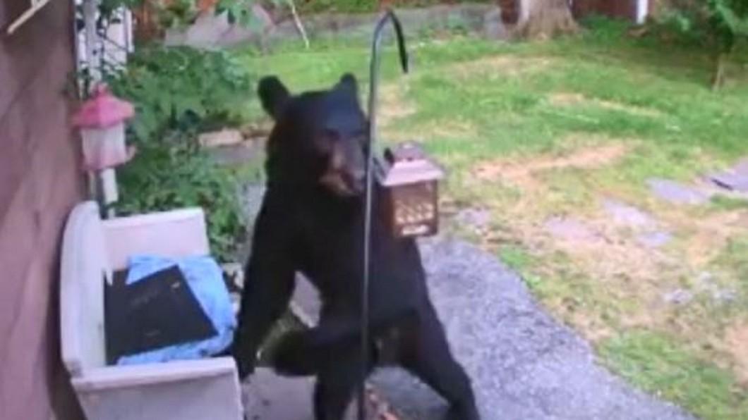 圖/翻攝自ODN YouTube 黑熊闖紐澤西民宅後院搞破壞 遭英勇拉拉驅離