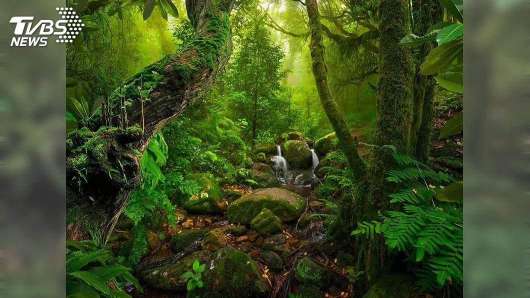 示意圖/TVBS 千年守護亞馬遜 認識原住民如何保護「地球之肺」