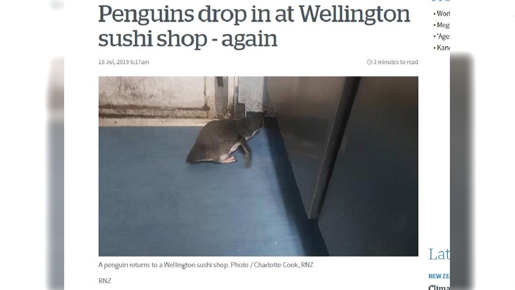 圖/翻攝自New Zealand Herald 紐西蘭企鵝搖擺過馬路 只為壽司店飄魚香