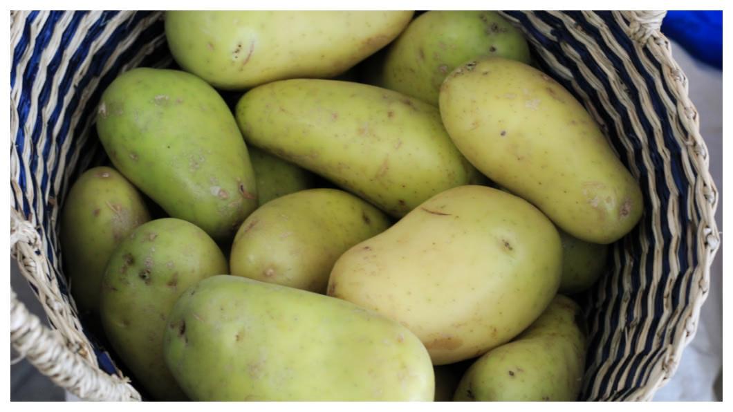 示意圖/TVBS 未熟馬鈴薯引發集體中毒 13名日本小學生嘔吐腹瀉
