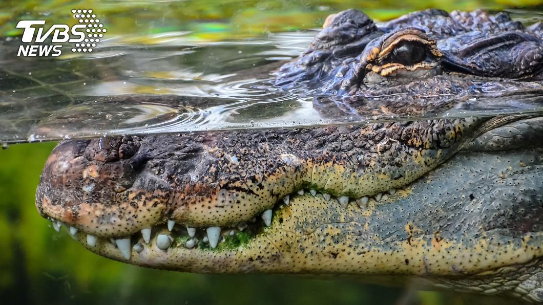 示意圖/TVBS 毒販將冰毒沖馬桶 流入下水道竟讓鱷魚嗑到嗨