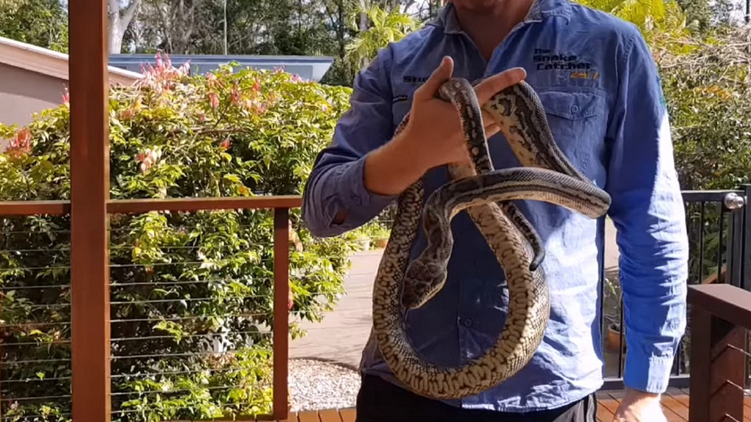 這條地毯蟒長達約2公尺。圖/翻攝自Sunshine Coast Snake Catchers臉書
