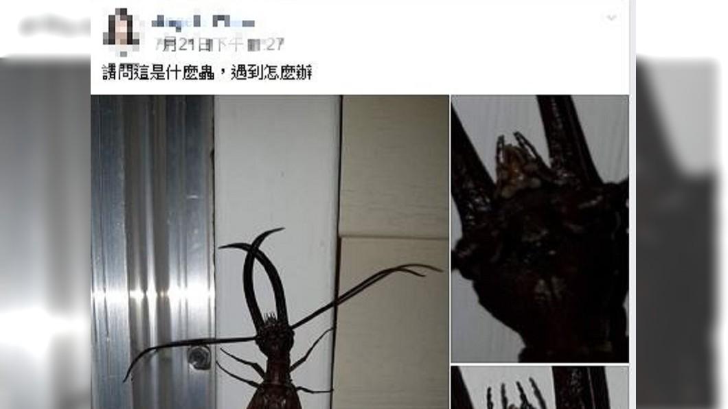 圖/翻攝自爆廢公社二館