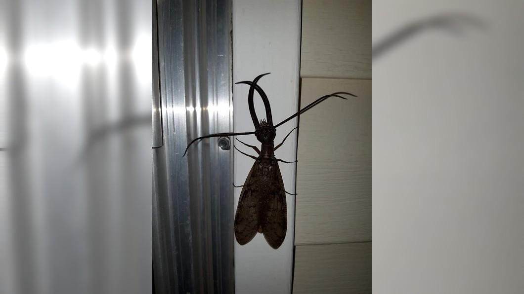 驚見雙鉗長觸鬚「異形蟲」 網嚇:什麼鬼東西!