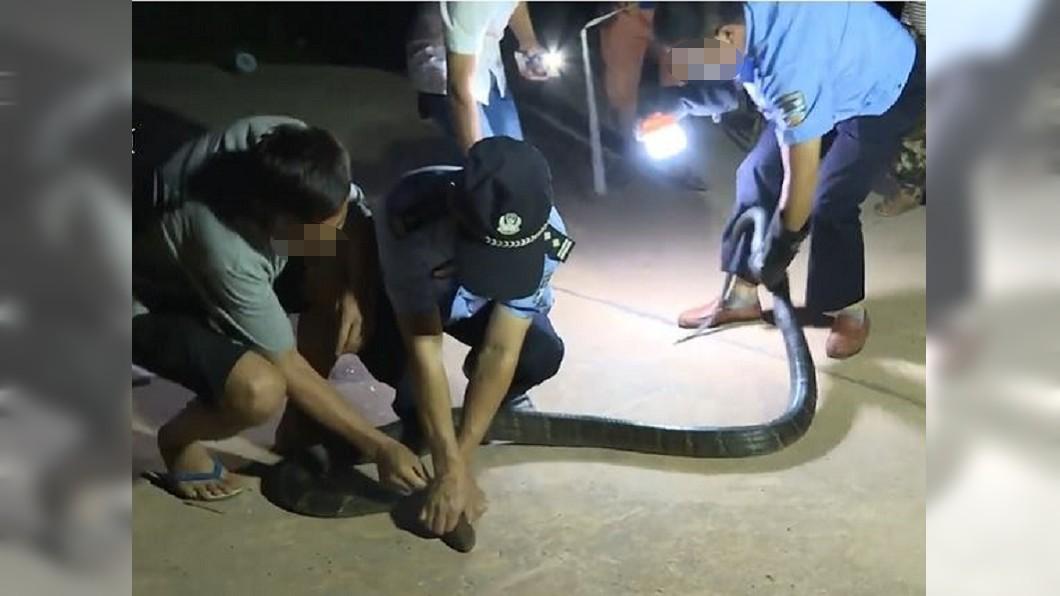 圖/翻攝自黎視頻影片 真實版「貪食蛇」狂吞60隻雞! 村民見3公尺蛇身驚呆