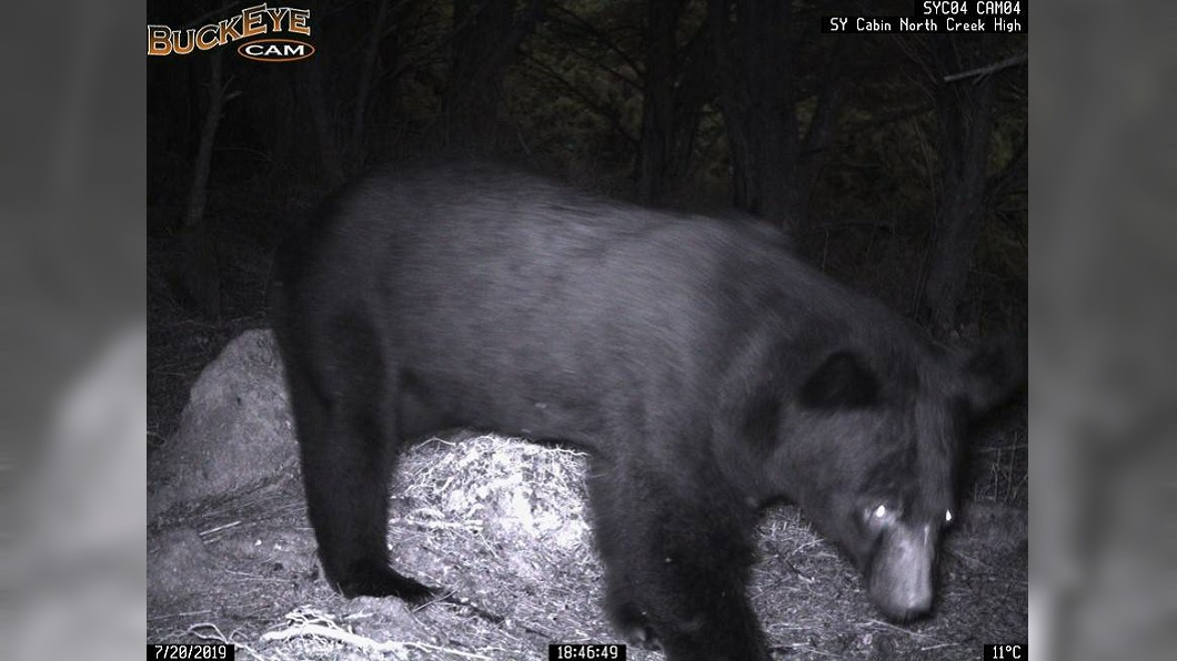 圖/台東林管處提供 黑熊出沒頻繁!向陽山屋預警系統奏效 成功阻人熊衝突