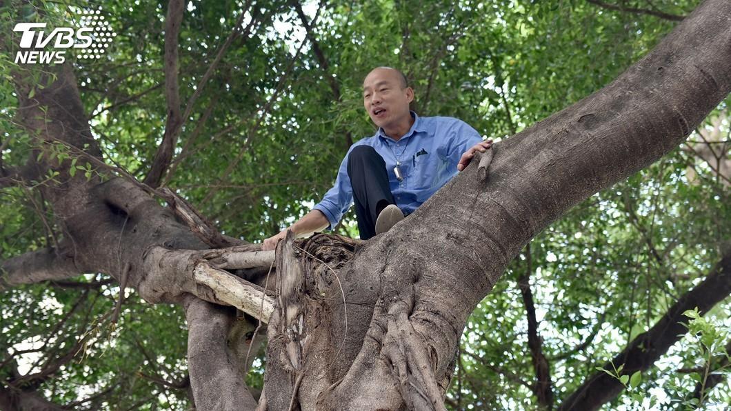 韓國瑜爬過的樹瞬間爆紅。圖/中央社 韓國瑜爬過的樹爆紅! 民眾笑稱:綁紅布條讓粉絲拜拜