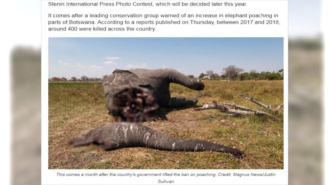 南非大象遭殘忍獵殺。圖/翻攝自Magnus News
