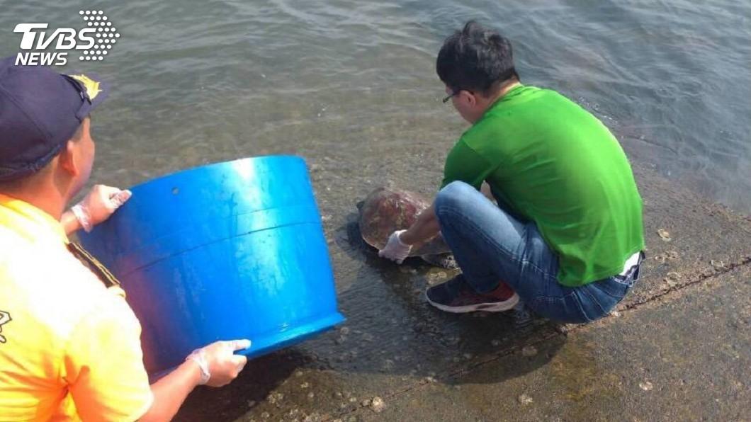 圖/中央社 保育類綠蠵龜誤闖漁網 馬祖海巡救援野放