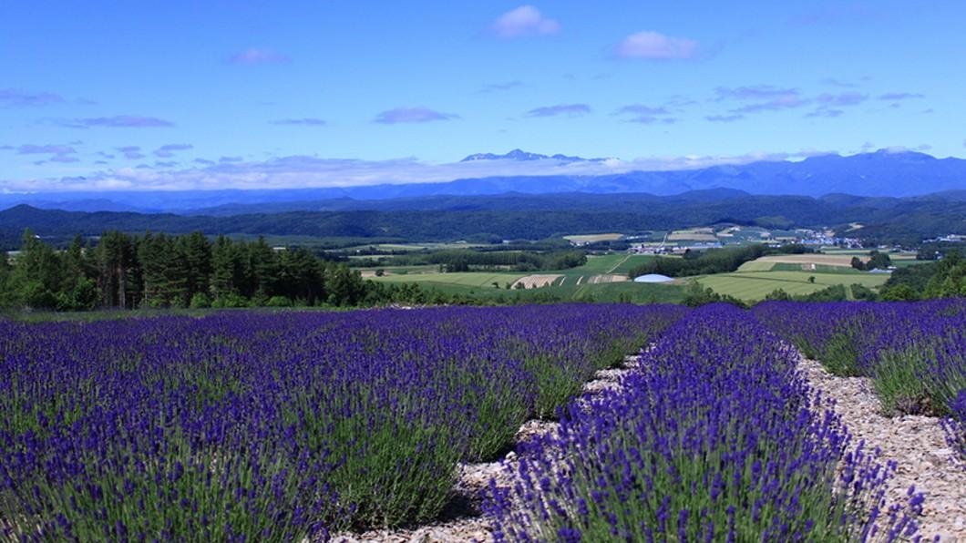 圖/樂天旅遊提供 紫色花海映照湖面 到北海道避暑追花