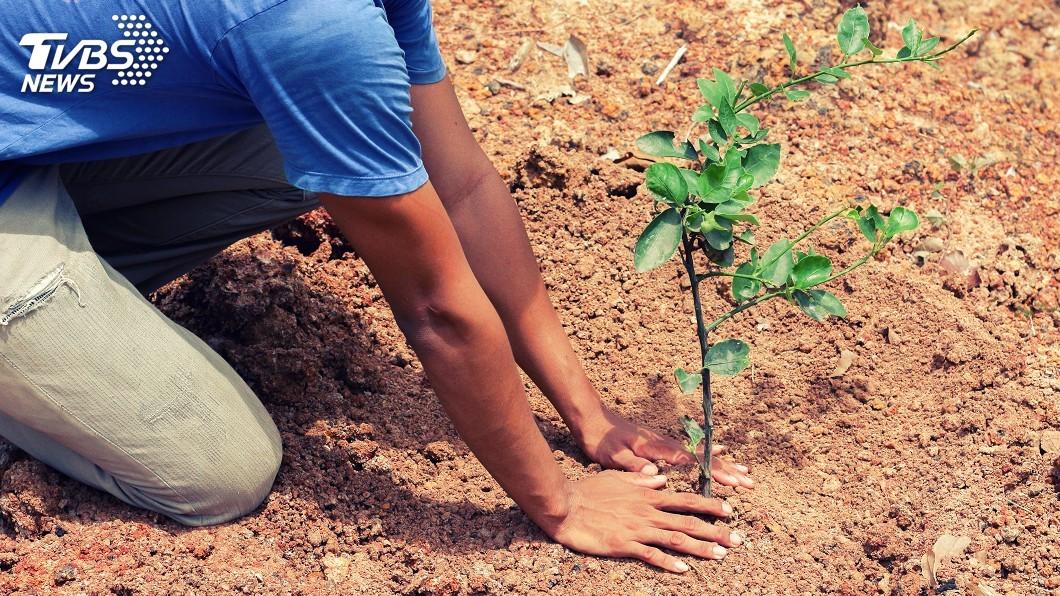 示意圖/TVBS 植樹遏止氣候變遷 科學家說成效被高估