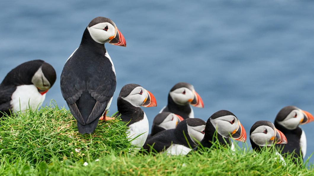 示意圖/TVBS 殘忍獵殺百隻瀕危海鸚 獵人蹲鳥屍前露燦笑