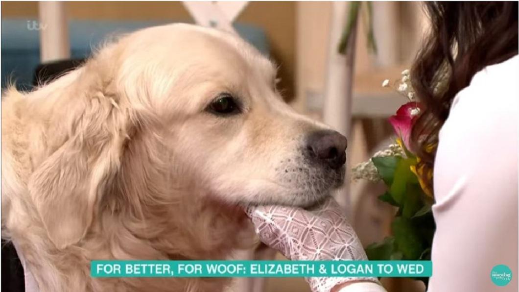 英國一名前泳裝女模因為對愛情失望,決定嫁給自己飼養的愛犬。(圖/翻攝自YouTube) 女模相親失敗221次…對男人徹底死心 轉念嫁「愛犬」