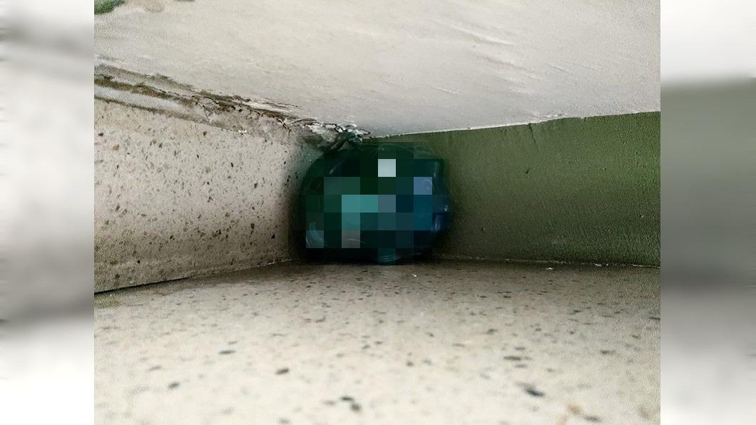 圖/翻攝自爆廢公社公開版 爬樓梯撿到透明藍生物 「肚子塞爆」網驚:來報恩的!