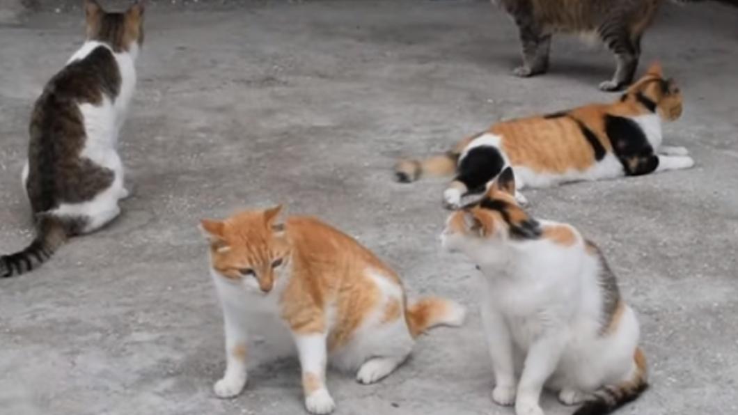 圖/翻攝自每日新聞YouTube 剩下30隻...貓島萌貓遭人毒殺「集體死亡」